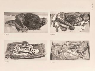 Catalogue of Egyptian Antiquities in the British Museum. Vol. I: Mummies and Human Remains[newline]M0444d-11.jpg