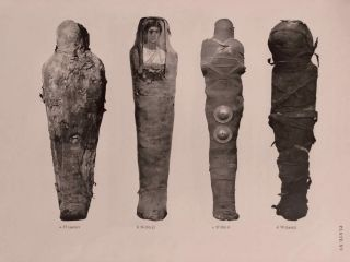 Catalogue of Egyptian Antiquities in the British Museum. Vol. I: Mummies and Human Remains[newline]M0444d-13.jpg